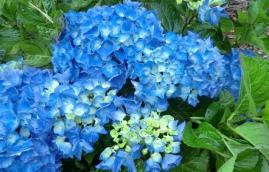 flores-2
